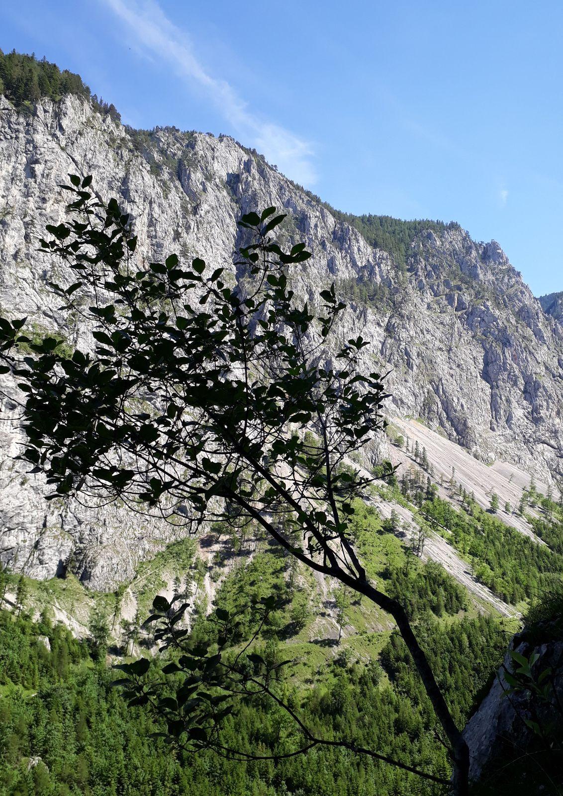 Gaisbauer Jug je trochu botanická cesta