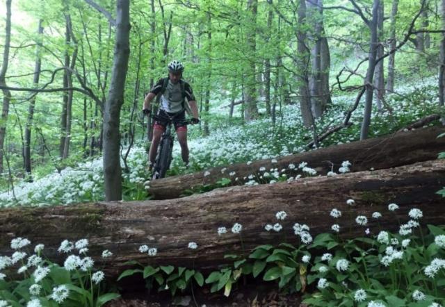 Vyzdobený les