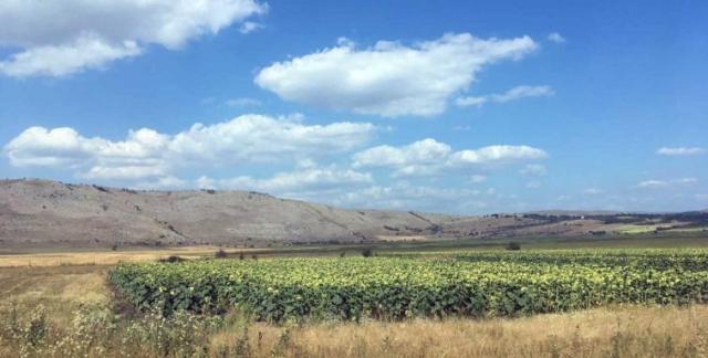 Slnečnicové polia a balkánske stepi