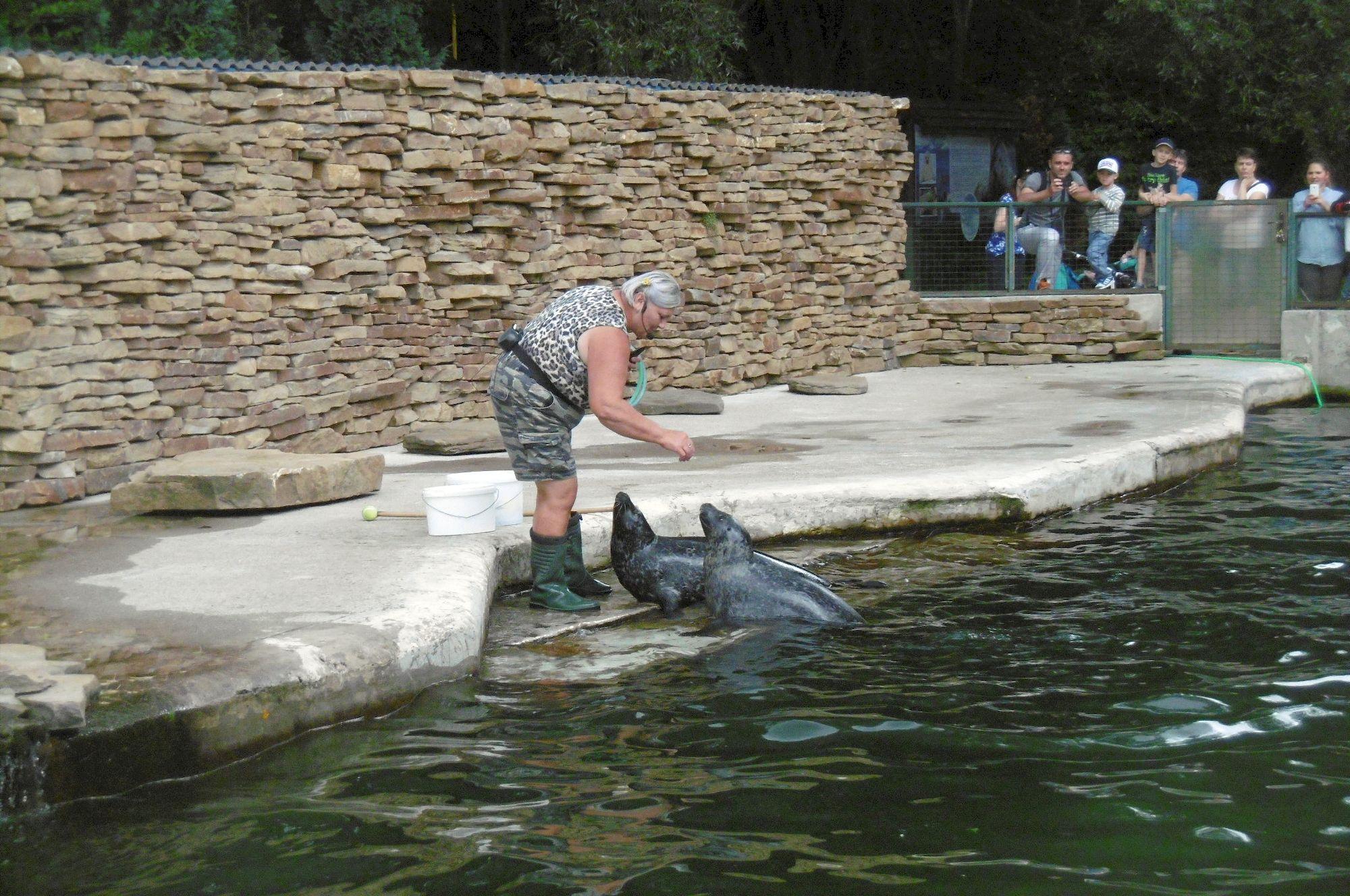 ZOO Košice kŕmenie tuleňov