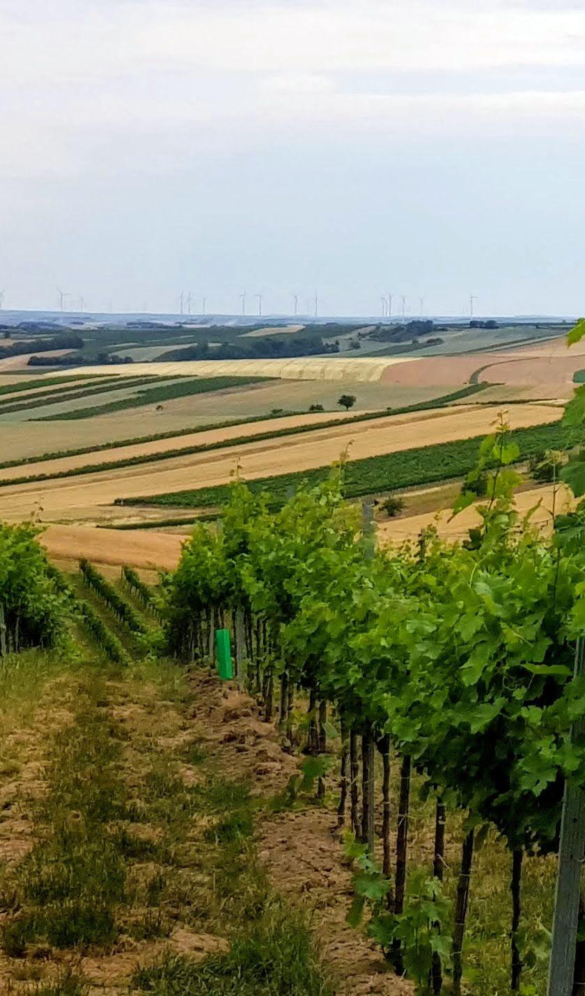 16 Vinohrady a rakúske vrtule