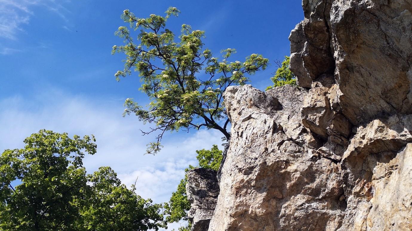 Skýcov 08 vrchol skalky X