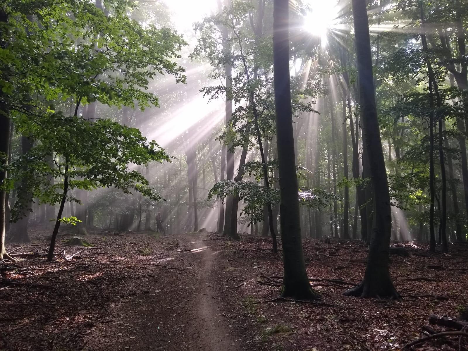 03 Z BA na Bradlo na bicykli Ráno v karpatskom lese