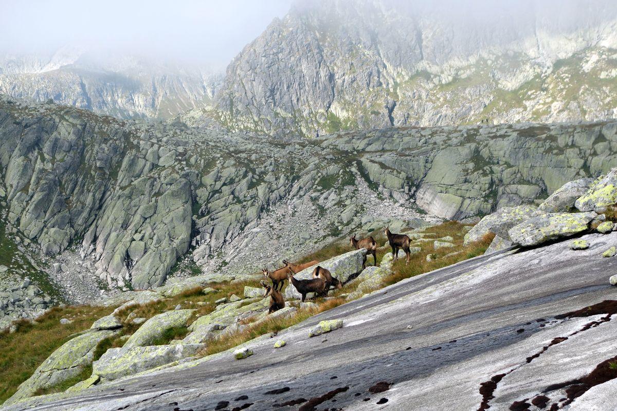 02 Spolužitie kamzíčej rodiny a lezcov